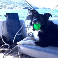 Bonny happy with her ball, at sea or on land