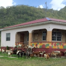 Local kids at school, Jolly Harbour, Antigua :)